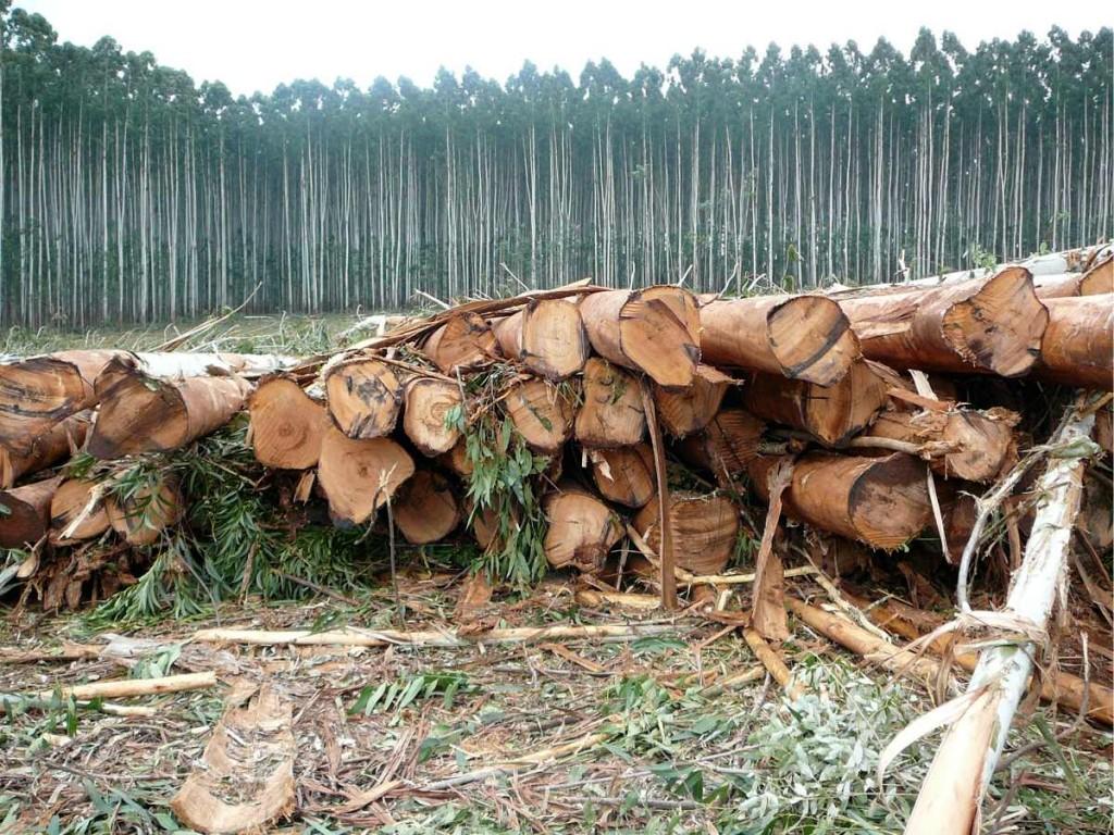 Ngwenya Forestry, Sabie, Mpumalanga